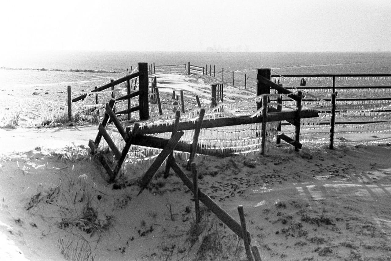 Glazen hekken van boer Mulder (foto 2)