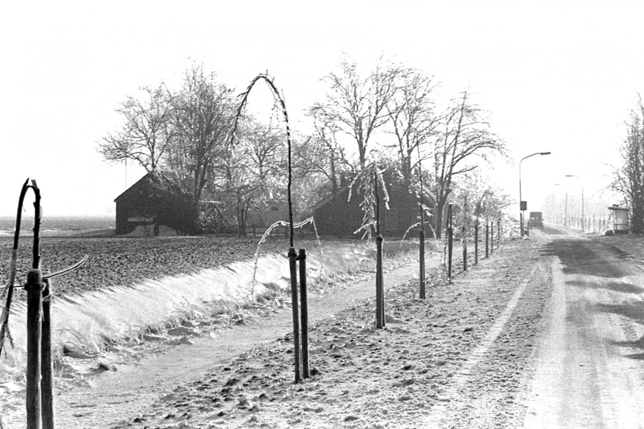 Maar de bomenaanplant langs de weg boog bijna dubbel of knakte