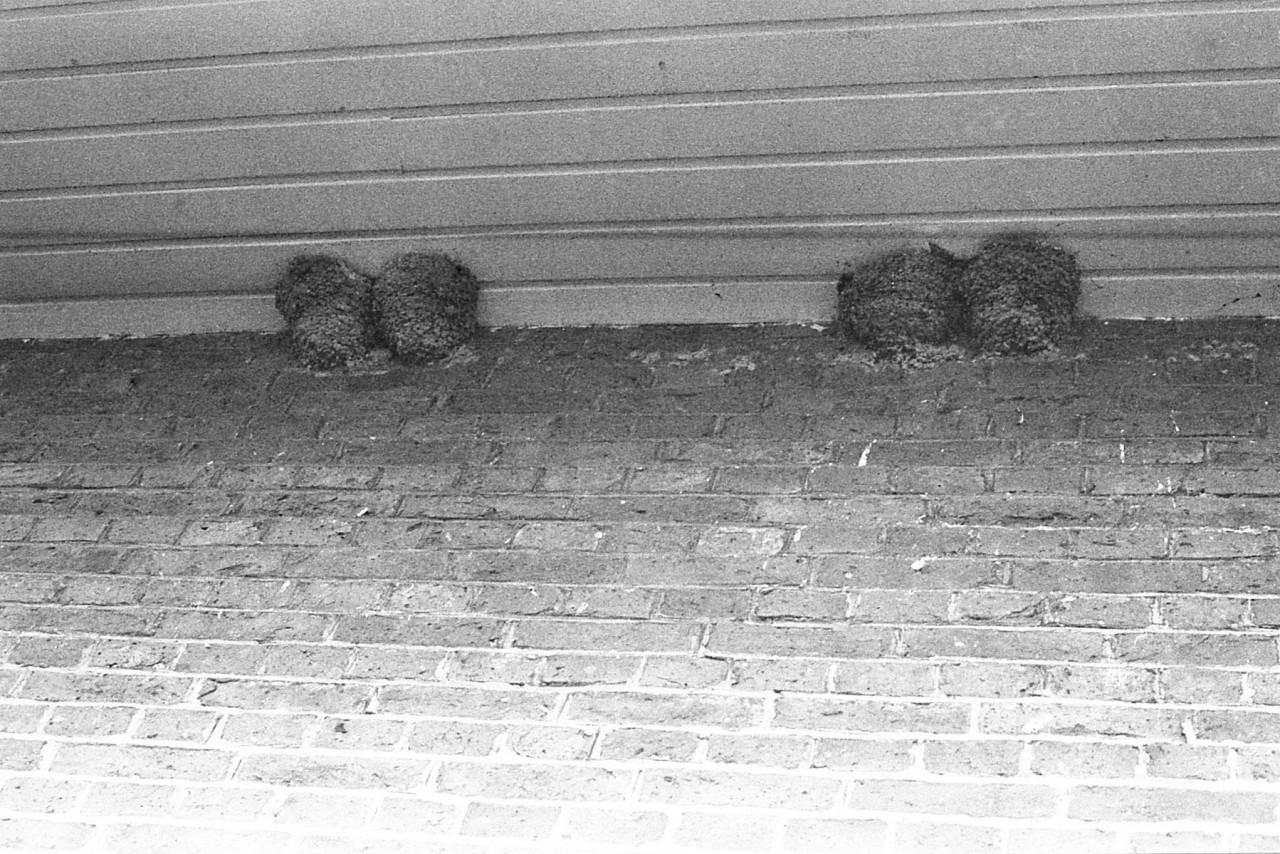 Huiszwaluwnesten onder het schooldak, begin 80er jaren